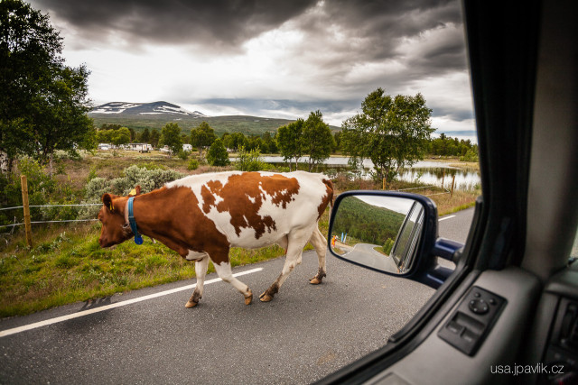 Norway Safari